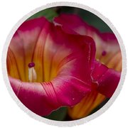 Stictocardia Beraviensis Hawaiian Sunset Vine Enchanting Floral Round Beach Towel
