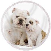 English Bulldog, Adult And Puppy Round Beach Towel