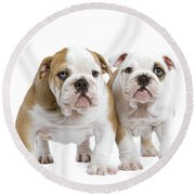 English Bulldog Puppies Round Beach Towel