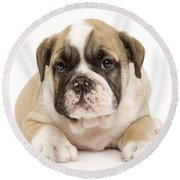 English Bulldog Puppy Round Beach Towel