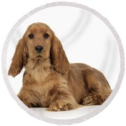 English Cocker Spaniel Round Beach Towel