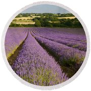 English Lavender Near Alton In Hampshire Round Beach Towel