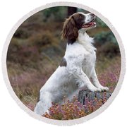 English Springer Spaniel Dog Round Beach Towel