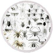 Entomology Myriapoda And Arachnida  Round Beach Towel