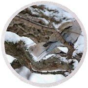 Eurasian  Collard Doves Round Beach Towel