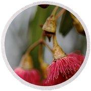 Eucalyptus Flower Round Beach Towel