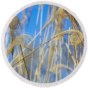 Eulalia Grass Native To East Asia Round Beach Towel