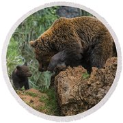 Eurasian Brown Bear 13 Round Beach Towel