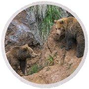 Eurasian Brown Bear 17 Round Beach Towel