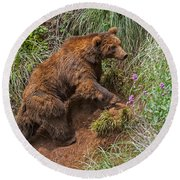 Eurasian Brown Bear 21 Round Beach Towel