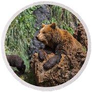 Eurasian Brown Bear 8 Round Beach Towel