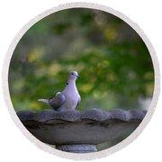 Eurasian Collared Dove Round Beach Towel