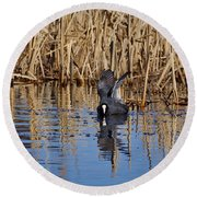 Eurasian Coot And The Bubles Round Beach Towel