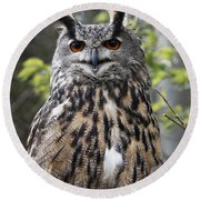Eurasian Eagle Owl Round Beach Towel