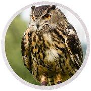 Eurasian Eagle Owl On Log Round Beach Towel