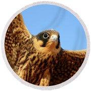 Eurasian Hobby Falco Subbuteo In Round Beach Towel