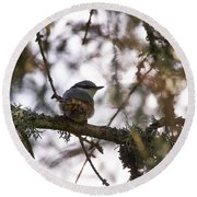 Eurasian Nuthatch Round Beach Towel