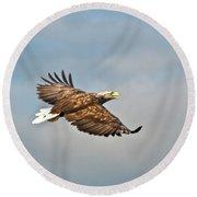 European Flying Sea Eagle 3 Round Beach Towel