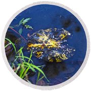Evening Encloses The Aging Lily Pad Round Beach Towel
