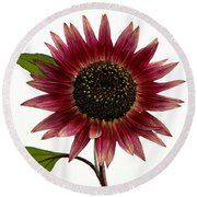 Evening Sun Sunflower 2 Round Beach Towel