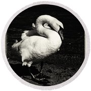 Evening Swan Round Beach Towel