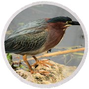 Everglades Green Heron Round Beach Towel