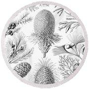 Examples Of Coniferae From Kunstformen Round Beach Towel by Ernst Haeckel
