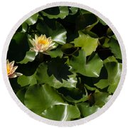 Exotic Colored Waterlilies In The Hot Mediterranean Sun Round Beach Towel