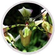 Exotic Ladyslipper Round Beach Towel