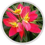 Exotic Red Flower Round Beach Towel