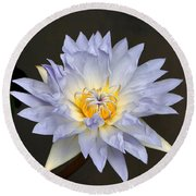 Exquisite Lavender Waterlily Round Beach Towel