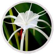Exquisite Spider Lily Round Beach Towel