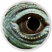 Eye Of A Common Iguana Iguana Iguana Round Beach Towel