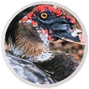 Eye Of The Muscovy Duck Round Beach Towel