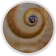 Eye Of The Snail Round Beach Towel by Susan Candelario
