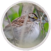 Eye On The Sparrow Round Beach Towel