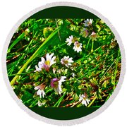 Eyebright On Trout River Trail In Gros Morne Gros Morne National Park-newfoundland  Round Beach Towel