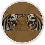 Eyes Of The Tiger Round Beach Towel by Sandy Keeton
