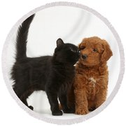 F1b Goldendoodle Pup With Kitten Round Beach Towel
