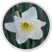 Face Of A Daffodil Round Beach Towel