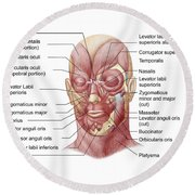 Facial Muscles Of The Human Face Round Beach Towel
