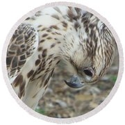 Bowing Falcon Round Beach Towel