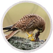 Falcon's Breakfast  Round Beach Towel