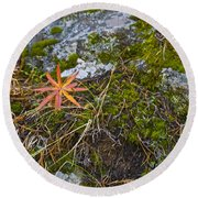 Fall And Moss Round Beach Towel