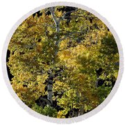 Fall Aspen Round Beach Towel