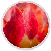 Fall Colors 0666 Round Beach Towel