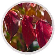 Fall Dogwood Leaves Round Beach Towel