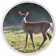 Fall Fawn Round Beach Towel