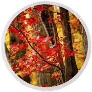 Fall Forest Detail Round Beach Towel