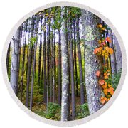 Fall Ivy In Pine Tree Forest Round Beach Towel